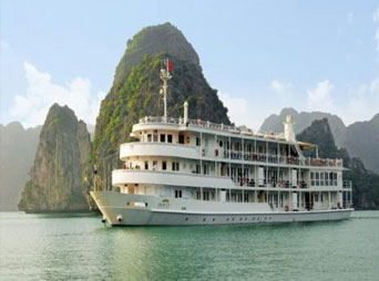The Auco Cruise (Best Price Guarantee)